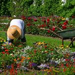 Leuchtkasten Blumen & Garten